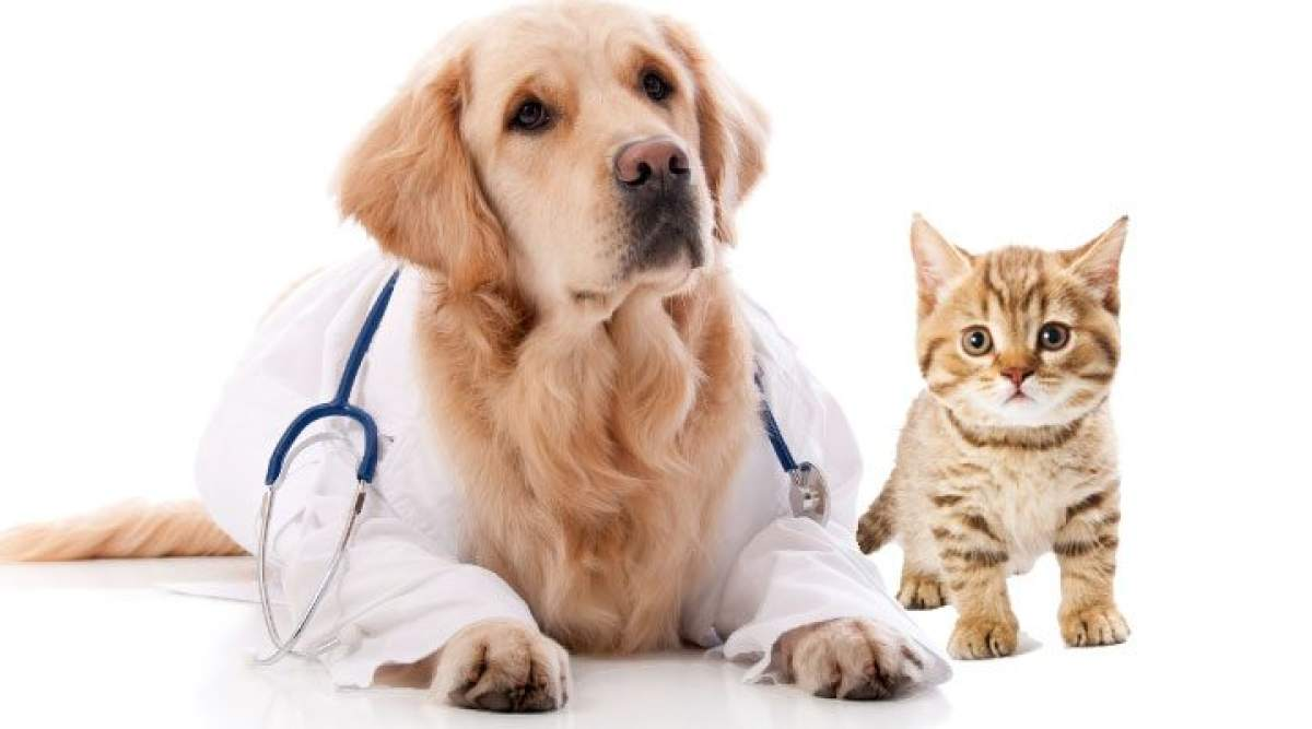 Animal Parasiticides Market report reviews size growth forecasts ...