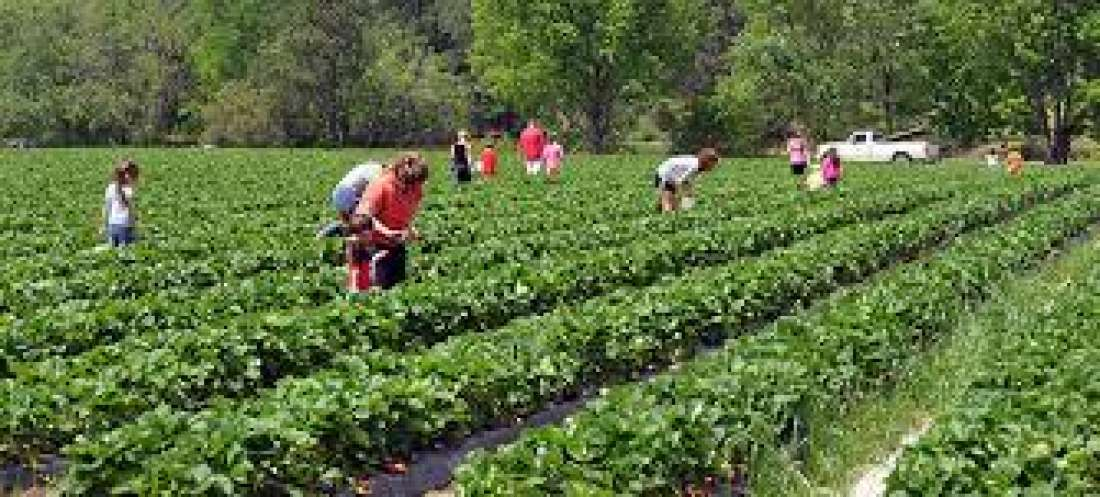 Agritourism market forecast to 2025 made available by top research ...
