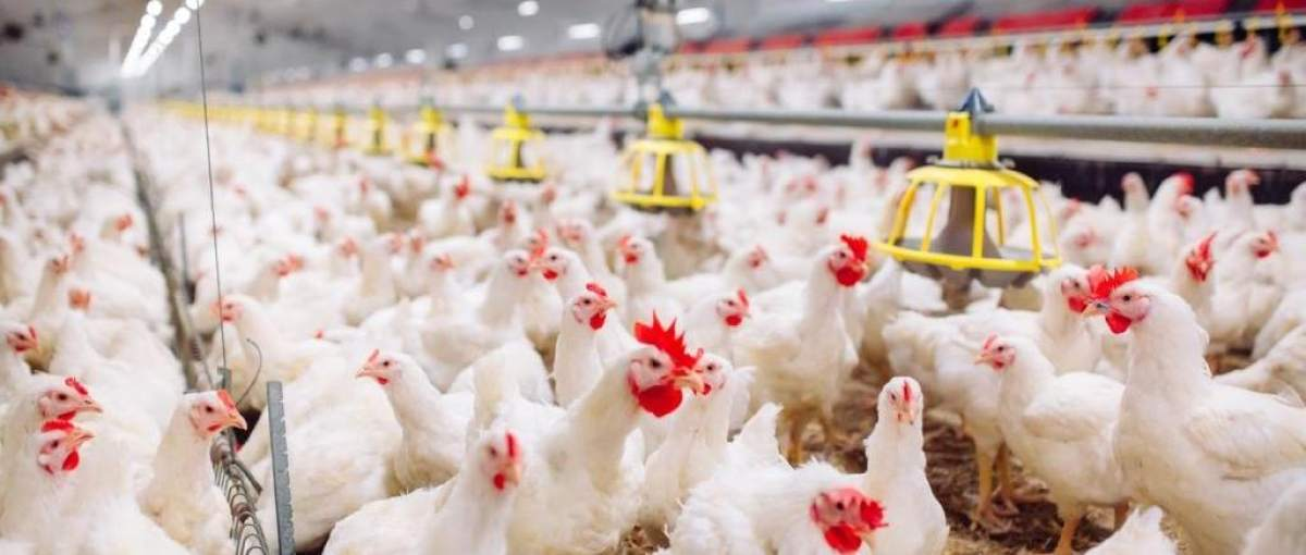 Image result for Poultry Manufacturing